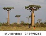 morondava  madagascar  november ... | Shutterstock . vector #346998266