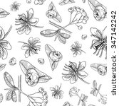 vector seamless floral pattern... | Shutterstock .eps vector #347142242