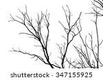 tree branches abstract... | Shutterstock . vector #347155925