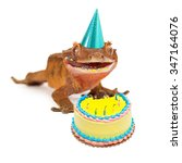 A Funny Crested Gecko Wearing ...