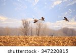 flock of geese with beautiful...