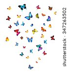 many different butterflies ... | Shutterstock . vector #347263502