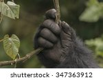 A Gorilla's Hand In The Jungle...