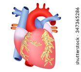 medical structure of the heart... | Shutterstock . vector #347365286