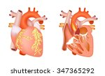 medical structure of the heart... | Shutterstock . vector #347365292