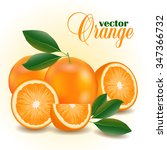 vector collection of fresh ripe ... | Shutterstock .eps vector #347366732