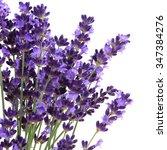 lavender flowers against white...   Shutterstock . vector #347384276