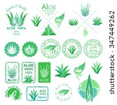 aloe vera design elements.... | Shutterstock .eps vector #347449262