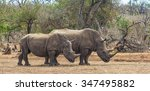 White Rhinoceroses Or Square...