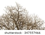 leafless tree branches with... | Shutterstock . vector #347557466