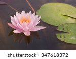 Water Lilies Are Among The Mos...