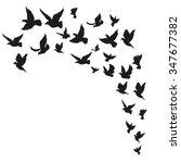 flock of birds. hand drawn...