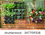 Ornamental Plants In Vertical