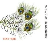 feather peacock design