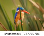 isolated malachite kingfisher... | Shutterstock . vector #347780708