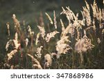 the grass in the field | Shutterstock . vector #347868986