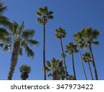California Palm Trees In The...