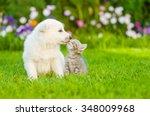 Stock photo kitten kissing white swiss shepherd s puppy on green grass 348009968