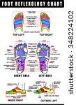 foot reflexology chart with... | Shutterstock .eps vector #348224102