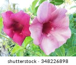 flower purple allamanda | Shutterstock . vector #348226898