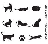 Stock vector set of isolated icons on a theme cats 348255485