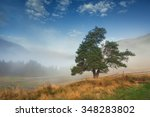 tree on the hill mountain fog... | Shutterstock . vector #348283802