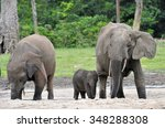 the african forest elephant ... | Shutterstock . vector #348288308