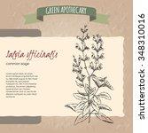 salvia officinalis aka common... | Shutterstock .eps vector #348310016