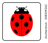 Ladybug Sign In The Frame....