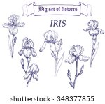 hand drawn illustration of iris.... | Shutterstock .eps vector #348377855