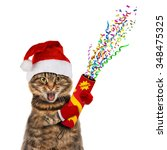 Funny Cat In Christmas Hat With ...