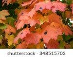 orange color in autumn of maple ... | Shutterstock . vector #348515702
