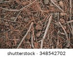 Fir Cone Needle Background