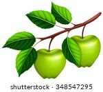 Green Apples On The Branch...