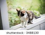 Stock photo kitten balancing on the window sill 3488130