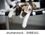 Kitten Sprawled On A Chair...