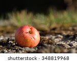Apple Lying On The Ground