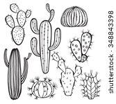 Cactus Isolated On White...