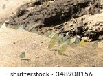 group of yellow butterfly on... | Shutterstock . vector #348908156