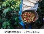 coffee farmer picking ripe... | Shutterstock . vector #349131212