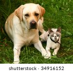 Cat and labrador retriever. - stock photo