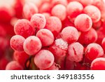 Frozen Red Viburnum Berries....