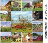 farm life collage | Shutterstock . vector #349199216