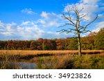 Colorful Autumn Leaves On Tree...