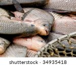 fish   carp   Shutterstock . vector #34935418