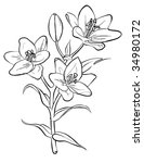 vector lilies. freehand drawing. | Shutterstock .eps vector #34980172