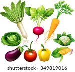 all kind of vegetables... | Shutterstock .eps vector #349819016