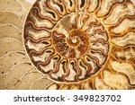 Detail Of Ammonite Fossil Shel...