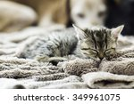 Stock photo cat 349961075