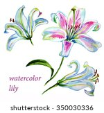 set of three watercolor lily...   Shutterstock . vector #350030336
